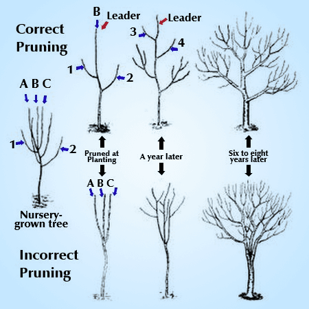 Good verse Bad Pruning examples of trees